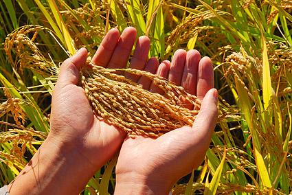 Farmers' Rice Cooperative - Farmers' Rice Cooperative